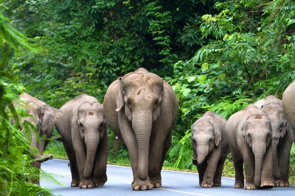 Groep olifanten op de weg