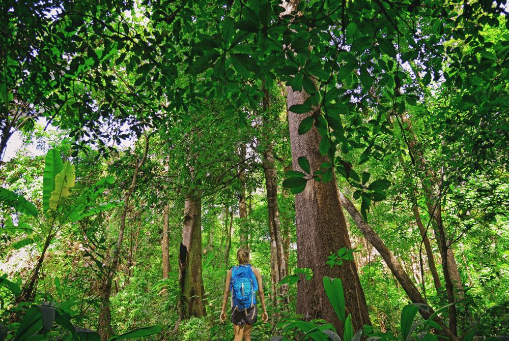 Meisje in de jungle